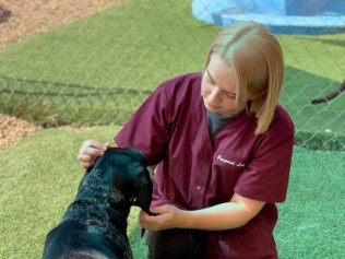 doggie day care evansville in