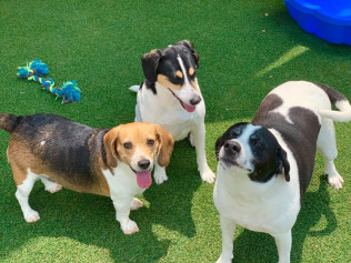 pet day care evansville in