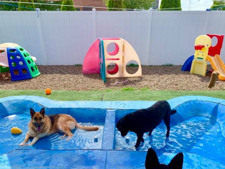 pet boarding evansville in