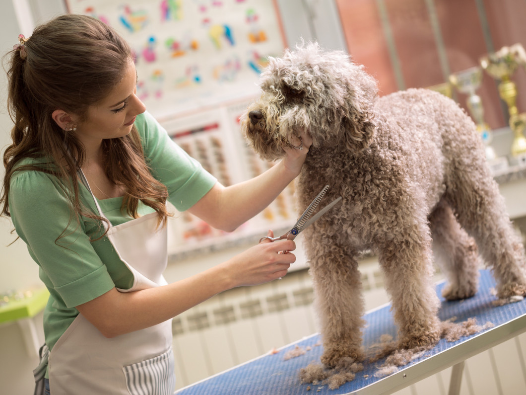 Dog / Pet Groomer in Evansville, IN